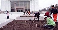 Активисты посадили цветущие кустарники у здания Государственного исторического музея