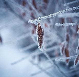 Замерзшие листья. Архивное фото