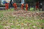 Тазалык ишканасынын кызматкерлери Бишкек шаарын күзгү жалбырактардан тазалап жатат