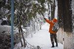 Сотрудник муниципального предприятия вытряхивает снег с деревьев в Бишкеке. Архивное фото