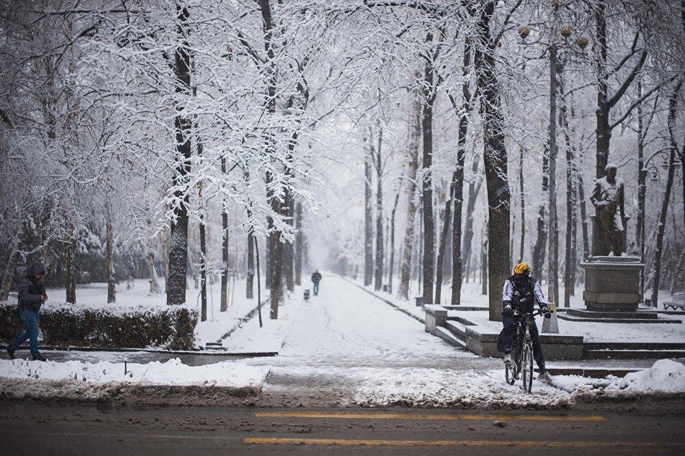 Күн суукка карабастан велосипединен түшпөгөн жаран
