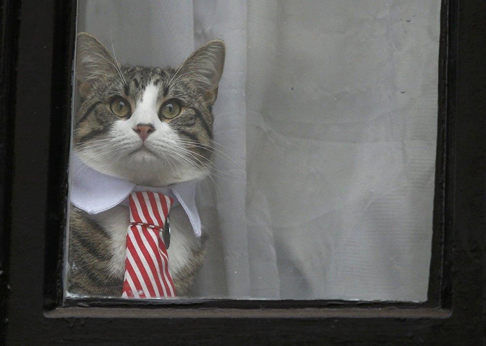 Лондондо WikiLeaks негиздөөчүсү Жулиан Ассанжды 14-ноябрда суракка алышты. Анын алдында Лондондогу Эквадордун элчилигинин терезесинде жасанып, галстук тагынган мышык пайда болду. Ал эми сурактын жүрүшү боюнча бир ооз да билдирилген жок