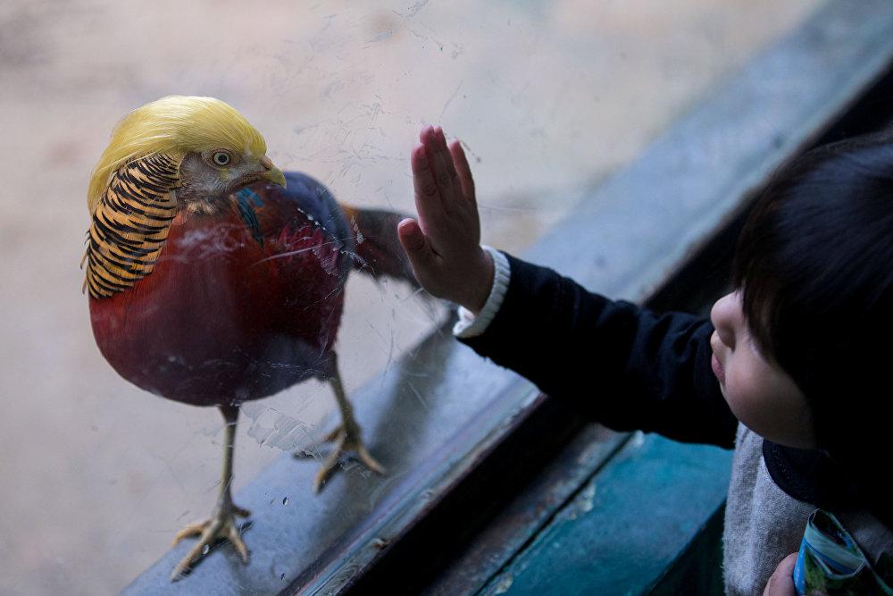 Кытайдагы Ханчжоудогу Сафари-парктагы алтын кыргоол АКШнын жаңы шайланган президентине кайсы бир жактарынан окшош болгондугу үчүн эл арасында белгилүү болуп кетти. Өзгөчө окшоштук канаттарын жайганы жана төбөсүндөгү жүнү болду деп айтышты ошол жердегилер.