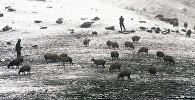 Чабаны с овцами. Архивное фото