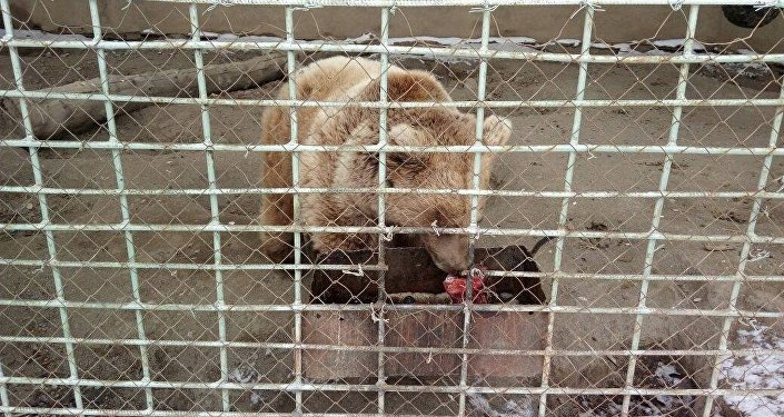 Чиновников призвали перечислить часть их заработной платы на покупку корма для животных единственного в Кыргызстане зоопарка, расположенного в Караколе