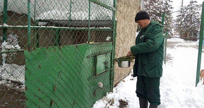 Ранее директор зоопарка Салтанат Сеитова сообщила, что Государственное агентство охраны окружающей среды и лесного хозяйства прекратило финансирование, поэтому сотрудники отдали месячную зарплату, чтобы прокормить животных