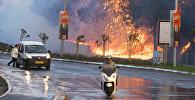 Последствия сильных лесных пожаров в Израиле