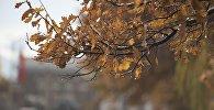 Ветки дерева после потепления. Архивное фото