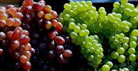 Грозди винограда. Архивное фото