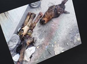 Найденные останки осла на пересечении улиц Осмонкула – Фрунзе в Бишкеке