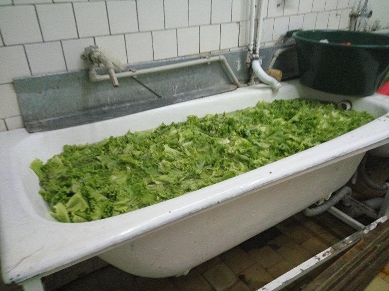 Очистка листьев салата в ванне