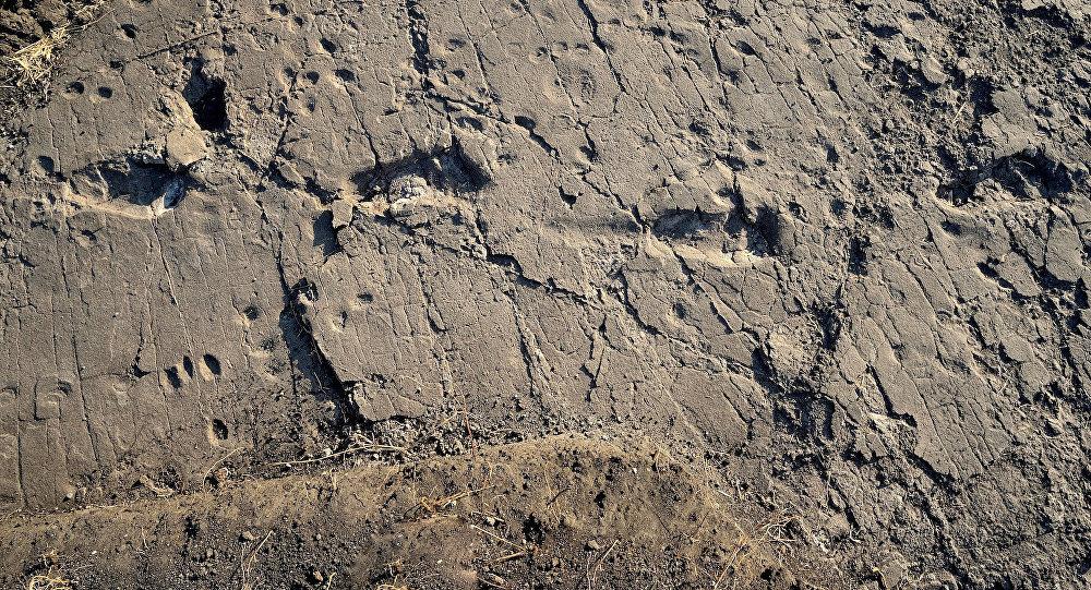 Следы гигантского австралопитека отыскали вТанзании