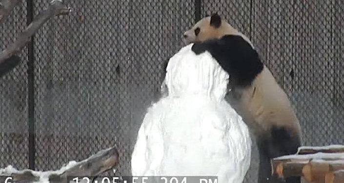 Кунг-фу панда кар киши менен мушташып интернетти дүң кылды