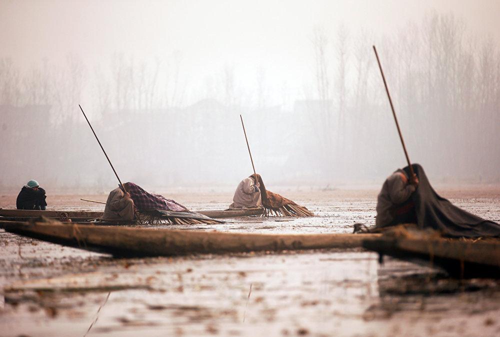Кашмирдеги Анчар көлүндөгү балыкчылар