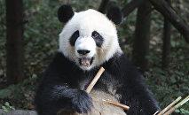 Панда. Архив