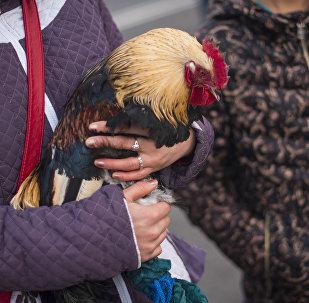Женщина с петухом на площади Ала-Тоо. Архивное фото