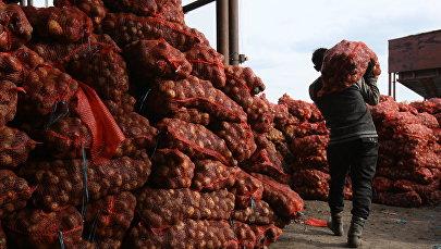 Рабочие складируют мешки с картофелем. Архивное фото