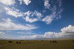 Лошади на джайлоо у озера Сон-Кол. Архивное фото