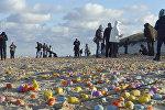 Германиядагы Лангеог аралынын жээгинде табылган Киндер-сюрприз оюнчуктары