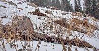 Факты незаконной вырубки лесов. Архивное фото