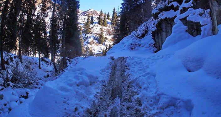 Следы того, как браконьеры волокли деревья по снегу на южном берегу Иссык-Куля