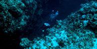 Аквалангист под водой. Архивное фото