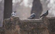 Голуби в парке. Архивное фото