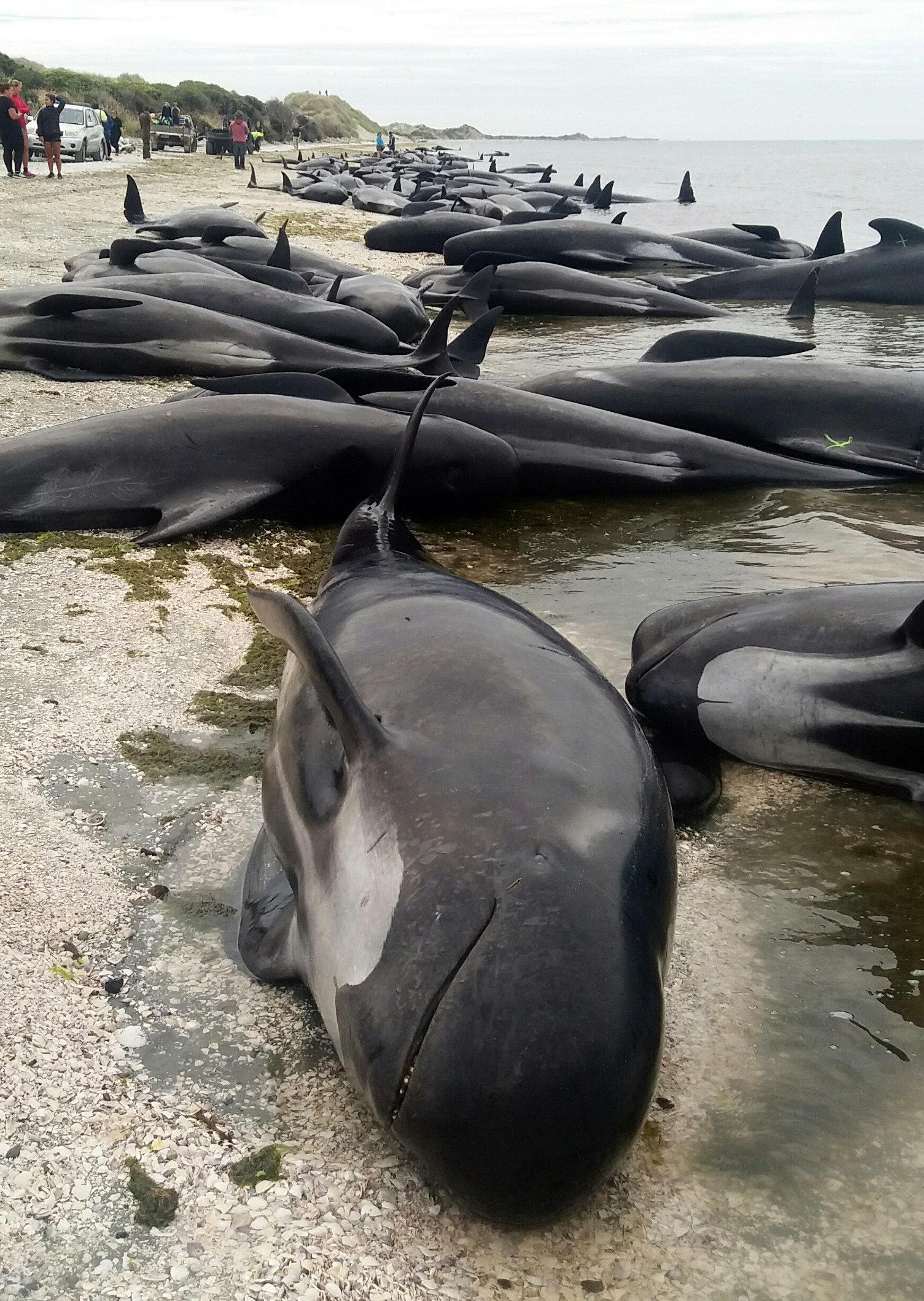 может кит выбросился на берег картинка есть фитнес-центр