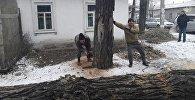 Муниципальное предприятие Зеленстрой спиливает аварийные деревья