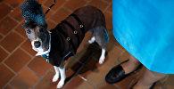 Выставка собак Westminster Kennel Club в Нью-Йорке
