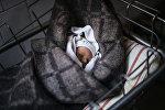 Новорожденный ребенок спит. Архивное фото