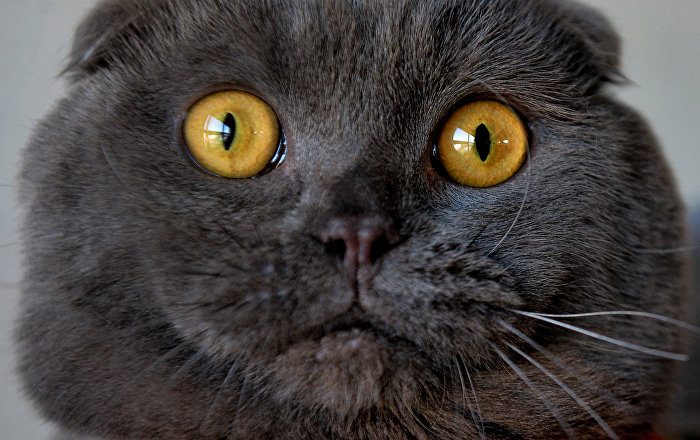 how to remove fleas from cats face