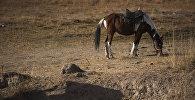 Выпас лошади. Архивное фото