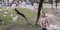 Девушка смотрит на дерево зацветшего урюка. Архивное фото