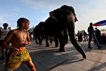 Бала жана пилдер. Индия. Архивдик сүрөт