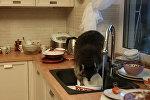 Алматинский енот забрался в дом и помыл посуду