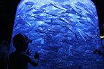 Мальчик рассматривает аквариум с рыбами. Архивное фото