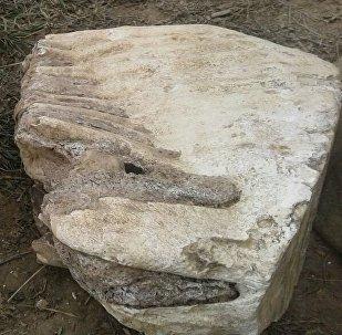 Ысык-Көлдөн табылган мамонттун сөөгү. Архивдик сүрөт