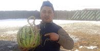 Аравандык Анвар аттуу дыйкан көп жылдан бери күнөскана тармагын мыкты өздөштүргөн адис, жеке ишкер Бакай Алиев