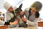 Студенты на практических занятиях ветеринарной медицины. Архивное фото
