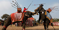 Жители Таиланда отмечают национальный день слона, который является символом страны. Архивное фото