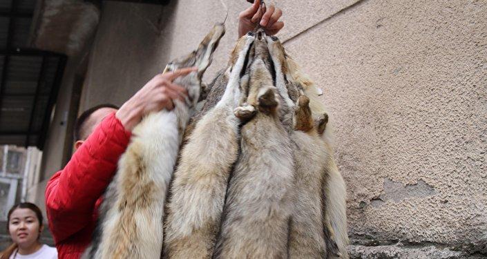 На рынке шкур, который находится на объездной трассе в Аламудунском районе, между шкурами лис и волков обнаружили чучело тянь-шаньского бурого медведя, занесенного в Красную книгу.