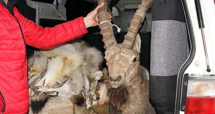 Немецкий союз охраны природы Барс NABU совместно с центральным аппаратом ГЭТИ провел рейды по столичным рынкам.