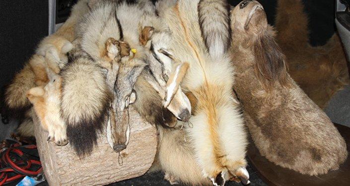 Шкуры лис и волков