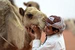 Мальчик из Саудовской Аравии позирует фотографу с верблюдом на ежегодном фестивале верблюдов короля Абдулацциза в Руме, примерно в 150 км к востоку от Эр-Рияда, 29 марта 2017 года.