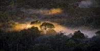 Утренний туман в джунглях Колумбии. Архивное фото