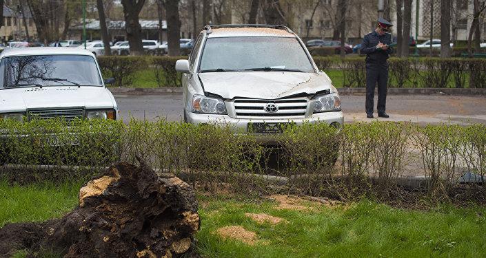 Из-за сильных порывов неподалеку от здания Госкомитета нацбезопасности по проспекту Эркиндик упало дерево и повредило три машины.