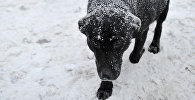 Собака. Архивное фото