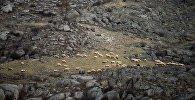 Алай районунун Гүлчө айыл аймагындагы Курманжан даткан айылында 20 метрлик жардан кулап кеткен киши аман калганын ӨКМ билдирди
