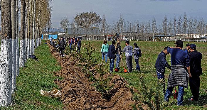 Сотрудники Аппарата Правительства Кыргызской Республики вышли на субботник в селе Белек Сокулукского района Чуйской области